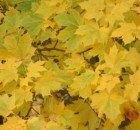 autumn-leaves-1563670-1278x960